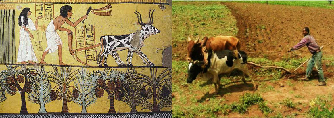 [Ancient] Egypt & Ethiopia; a mirror of a Hamo-Shemitic culture_ (on L-Hieroglyphic art of farming in Egypt & on R-a more modern Ethiopian farmer plowing crops.)
