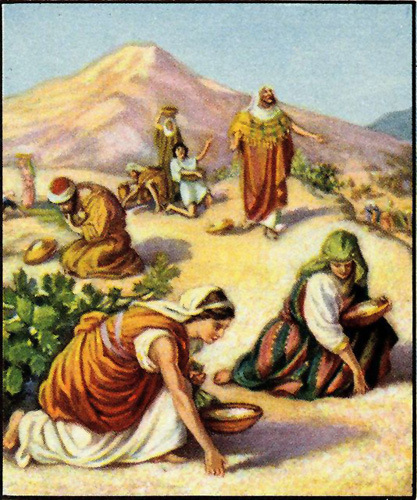 Israelites gathering the Manna.