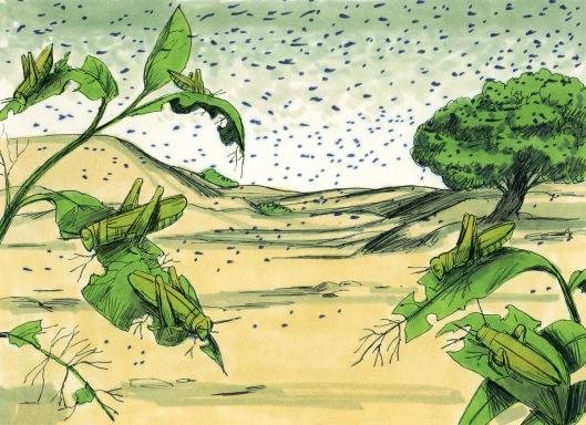 waera - parsha (plague-lice)