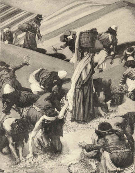 Gathering of the Manna _ James J. Tissot