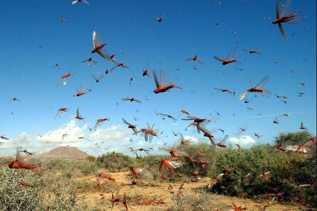 bo - parsha (locust 8th plague)
