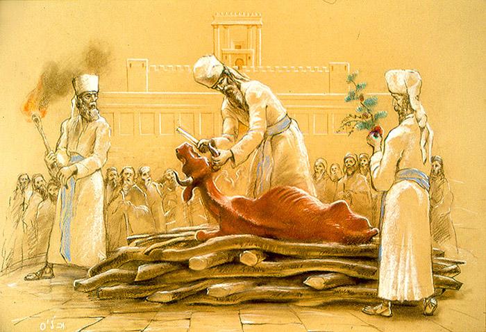 chukat - parsha [the red heifer_on_logs]