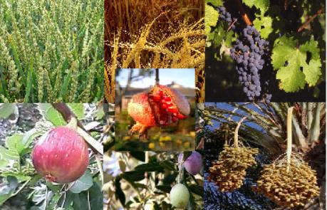 """…A land of wheat, and barley, and vines, and fig trees, and pomegranates; a land of oil olive, and honey;…""  [Deut. 8:8]"
