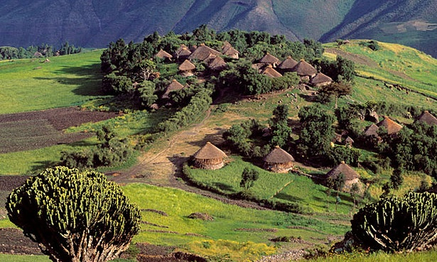 Mirrors of Hamo-Shemitic culture: Ethiopian Tekuloch in the country side (resemblances of the succahs)